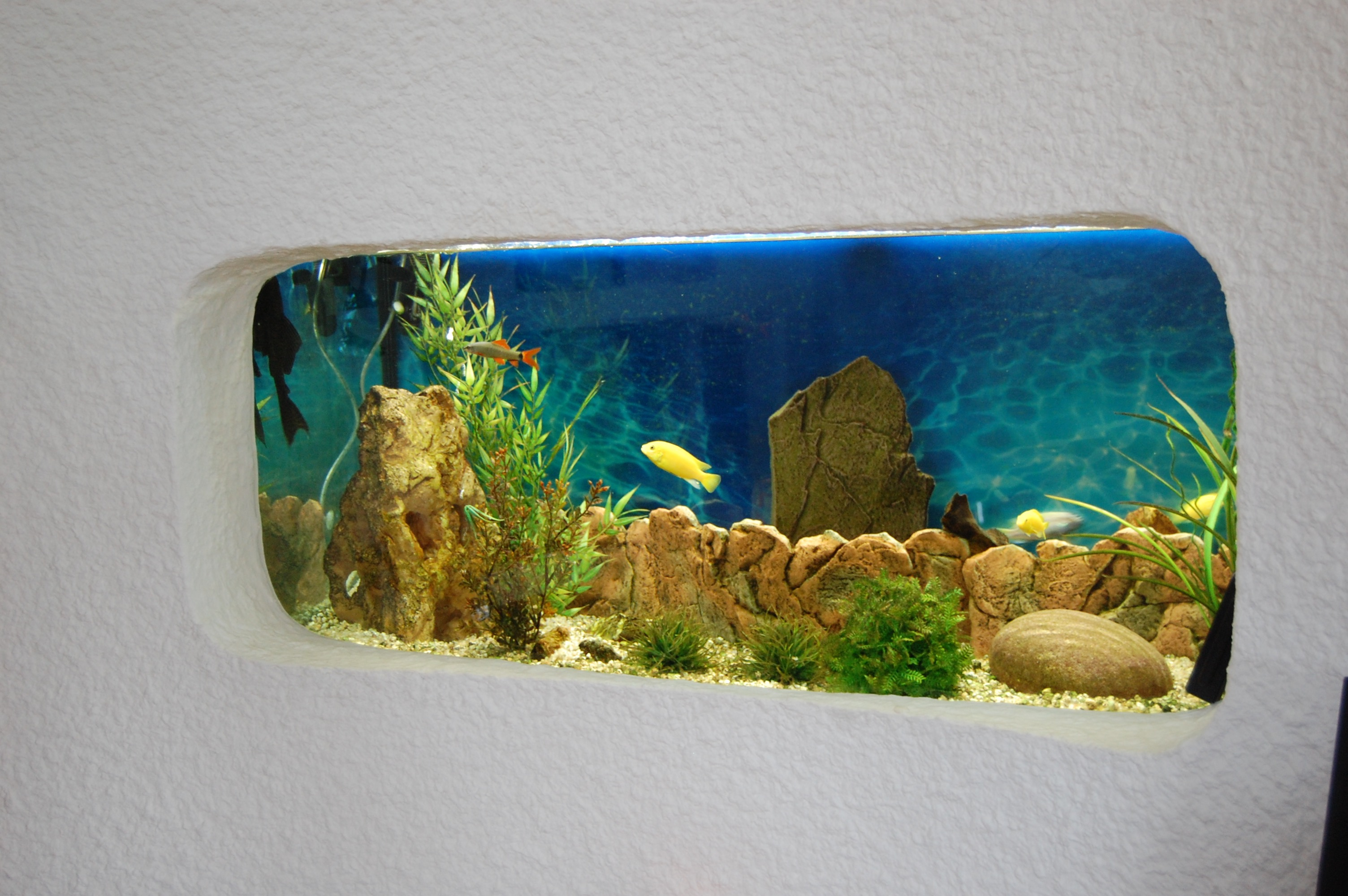Aquarium sur mesure for Aquarium bassin