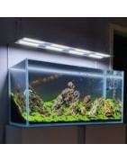 éclairage aquarium