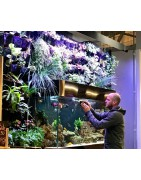 Accéssoires Aquarium